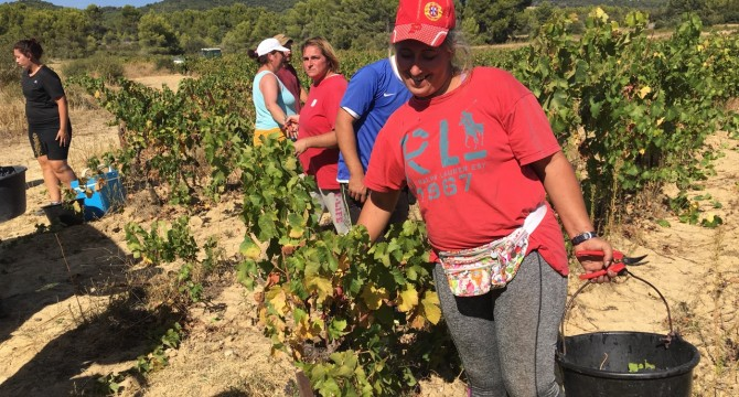 End of the harvest 2018: a promising vintage