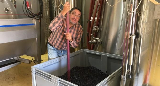 Fin des vinifications : confirmation d'un très beau millésime 2020