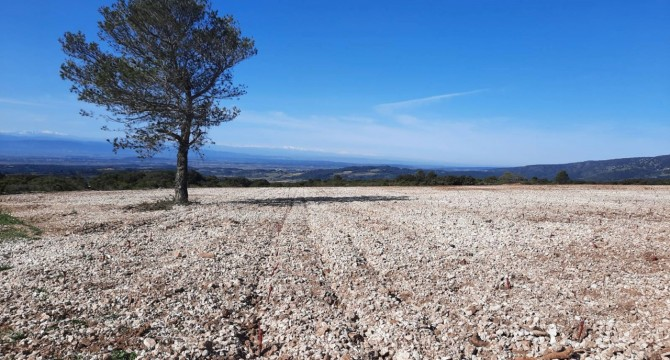 Nouvelle plantation en altitude